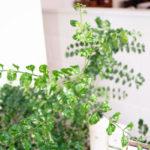 店内の植物たち